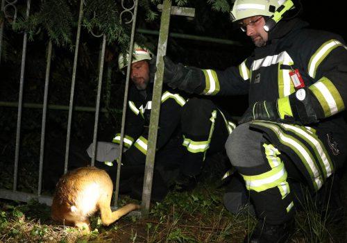 Einsatz Reh im Zaun ©Timo Jann/Lauenburgerische Landeszeitung